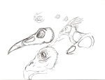I love birds and bird skulls because they are just so cool looking and fun to draw