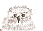 owls are awesome