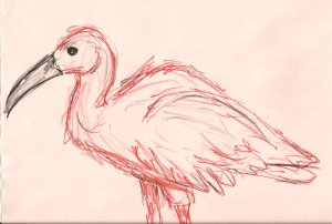 This is a scarlet ibis drawn with crayola makers