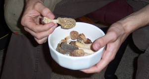 A bowl contianing several of our finds.  Note the different colors and sizes.  Also, make sure you cook any morels before eating to avoid stomach upset.