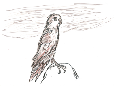 Just a hawk.  Rough and using multiple mediums.