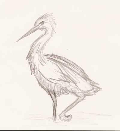 Rough and quick like most of my drawings.  Also another bird (heron).  I think this one is really good with theneck shape though the wing is off