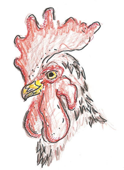 Obviuously, as I've probably mentioned before, I really like drawing birds.  This rooster head by no means is intended as support for USC (it was just a cool looking picture I saw and wanted to draw), I have allegiance with Clemson all the way
