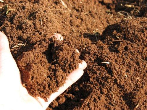 Lovely soil