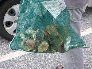 bag of mushrooms