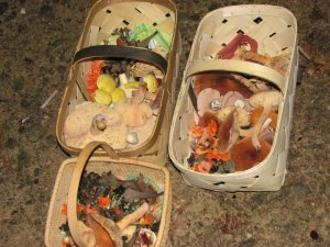 baskets of mushrooms