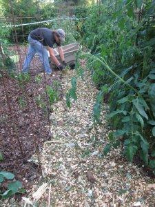 laying mulch
