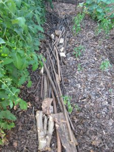 logs and sticks in the path